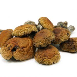Thai Magic Mushrooms